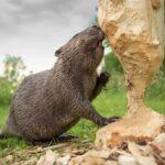 Трудоголики: 8 Самых Трудолюбивых Животных