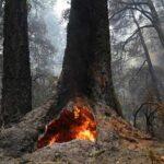 5 Огнеупорных Деревьев, Которым Не Страшны Пожары