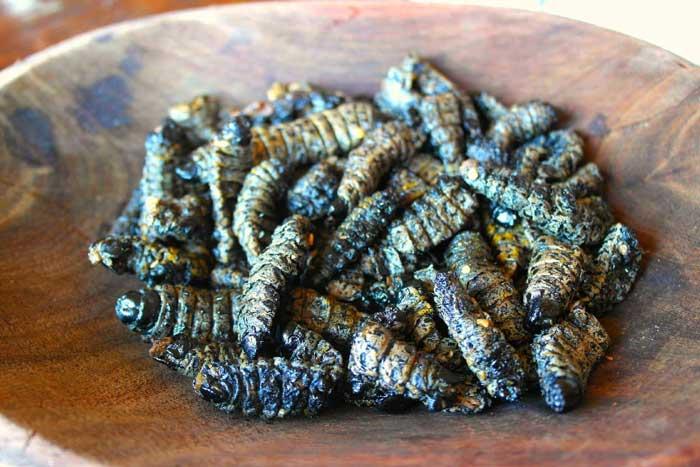 Гусеницы жареные