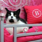 Топ-5 самых роскошных кошачьих отелей по всему миру