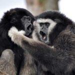 10 Животных С Голосовым Общением