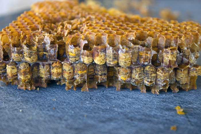 Пчелы соты