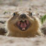 10 Животных, У Которых Никогда Не Перестают Расти Зубы