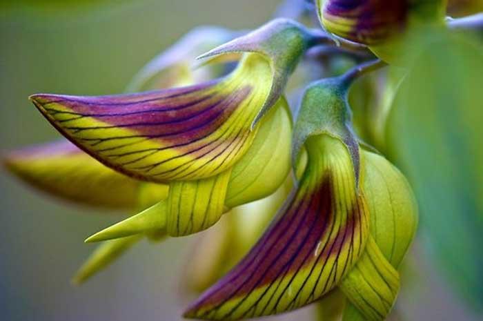Птичий цветок