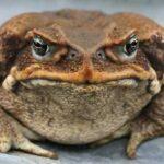 10 Опасных Инвазивных Видов Животных