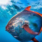 5 Интересных Теплокровных Рыб