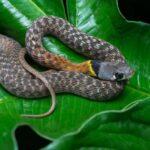 Смертельные Змеи: 10 Самых Ядовитых Змей В Азии