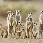 Многопоколенная Семья: 12 Эусоциальных Животных, Которые Живут Вместе