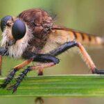 7 Опасных Видов Мух, Которых Следует Избегать