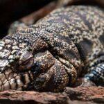 Брумация: 5 Хладнокровных Животных, Которые Отдыхают При Низкой Температуре