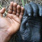Отличительные Знаки: 3 Животных С Отпечатками Пальцев, Как У Людей