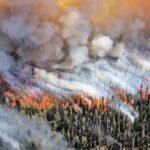 Активные Пирофиты: 3 Растения, Способствующие Возникновению Лесных Пожаров
