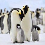 Преданные Отцы: 11 Отцов-Животных, Которые Заботятся О Своих Детях