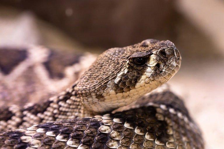 Пептид яда змеи