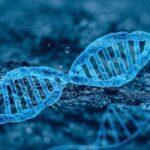 Наследственные Заболевания: 11 Заболеваний, Которые Передаются По Наследству