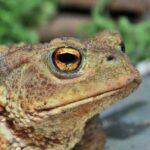 Необыкновенное Зрение: 4 Животных С Прямоугольными Зрачками
